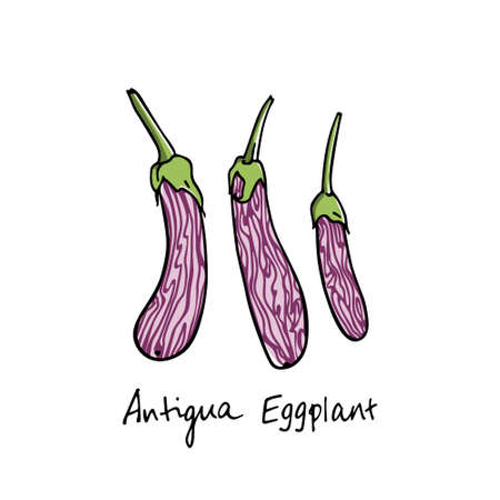Handgetrokken aubergines Stockfoto - 80378321