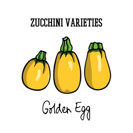 Hand drawn zucchini Illustration