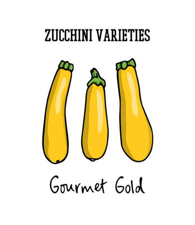Hand drawn zucchini Ilustração
