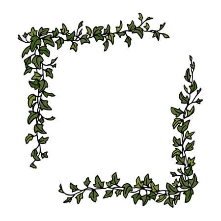 English ivy corner