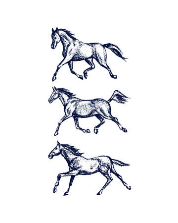 Hand drawn running horses Illustration