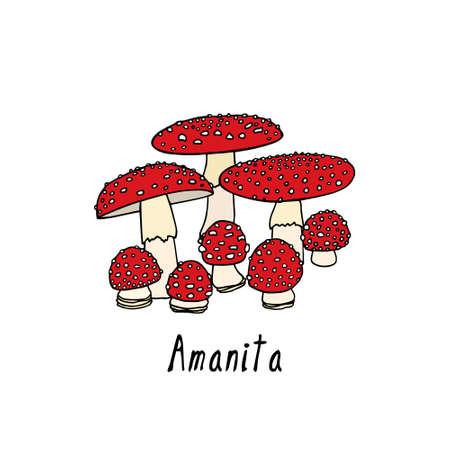 Hand drawn amanita mushrooms Illustration