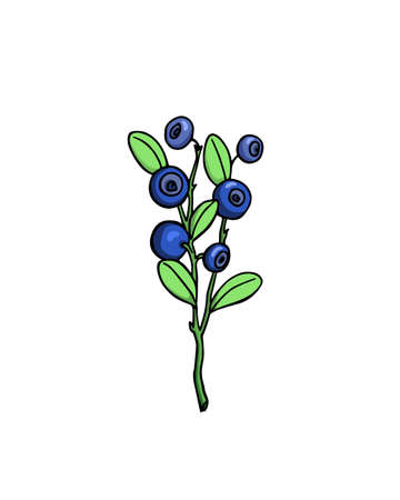 화이트 절연 블루 베리 나뭇 가지의 손으로 그린 그림 일러스트