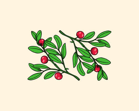 Hand drawn cranberry twig