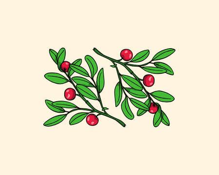 Hand drawn cranberry twig