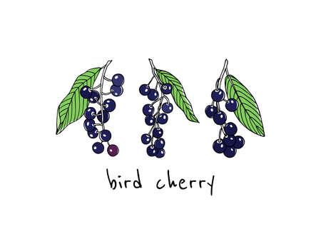 Hand drawn bird cherry twigs