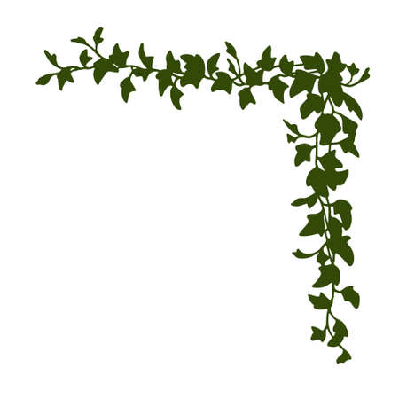 Vector corner made of hand drawn english ivy branches. Beautiful floral design elements.