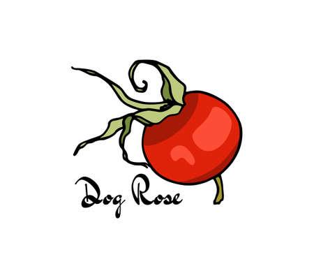Hand drawn dog rose Illustration