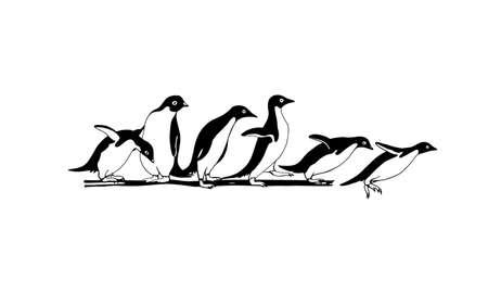 Hand drawn penguins
