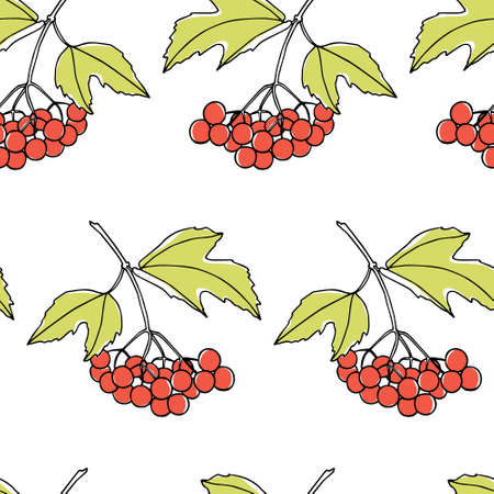 guelder rose: Pattern with hand drawn viburnum twigs Illustration