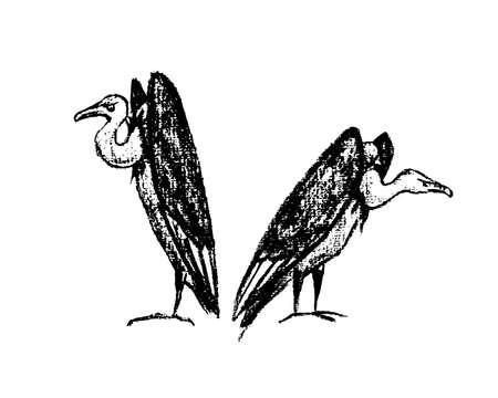 morose: Hand drawn creepy and comic vultures Illustration