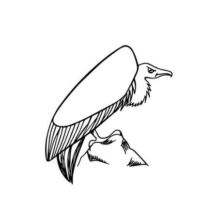 morose: Hand drawn creepy and comic vulture