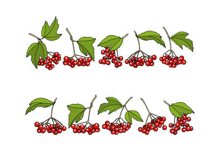 guelder rose: Vector graphic set of hand drawn viburnum twigs. Beautiful floral border or design elements Stock Photo