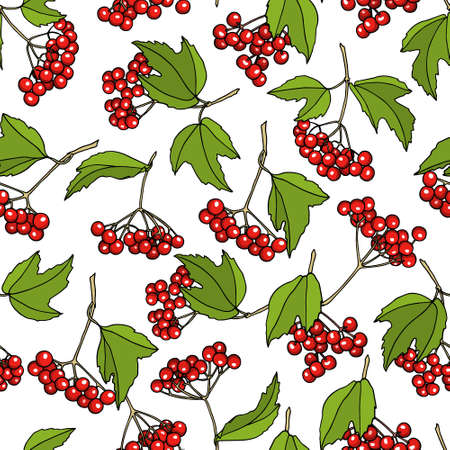 guelder rose: Vector seamless pattern with hand drawn viburnum twigs. Beautiful food design elements, ink drawing Illustration