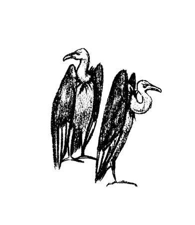 Hand drawn vultures