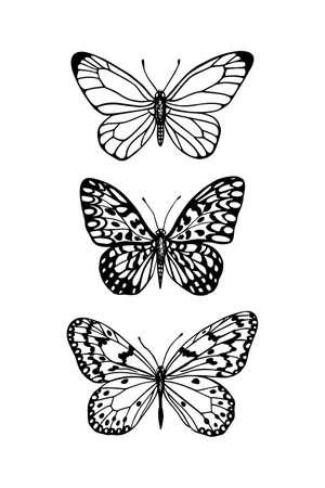 Illustration vectorielle de papillons dessinés à la main. Dessin à l'encre, style graphique. Éléments de design magnifiques. Style vintage. Banque d'images - 87215901