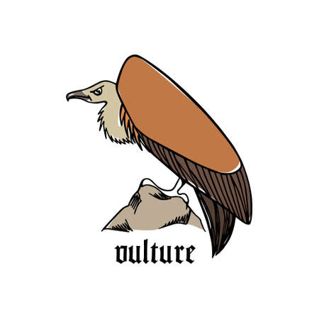 morose: Illustration of hand drawn creepy and comic vulture.