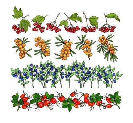 guelder rose: Hand drawn viburnum and cherry twigs. Illustration
