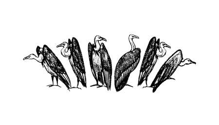morose: Vector illustration of hand drawn creepy and comic vultures. Charcoal drawing, beautiful Halloween design elements.