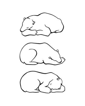 Vector graphic set of hand drawn cute sleeping polar bears. Beautiful ink drawing, animal illustration