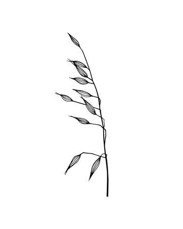 Hand drawn meadow grass.