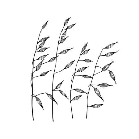 Vector illustration of hand drawn meadow grass. Ink drawing, graphic style.