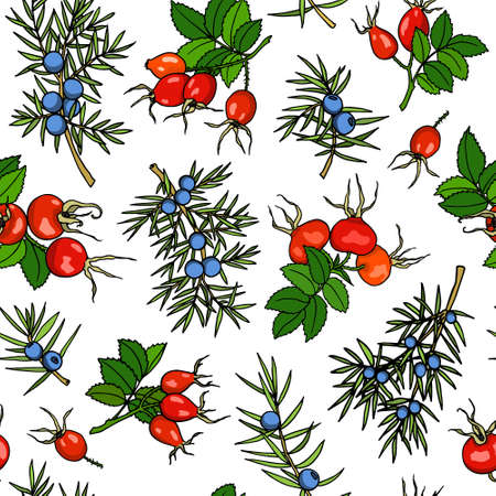 Vector seamless pattern with hand drawn dog rose and juniper twigs. Beautiful design elements, ink drawing.