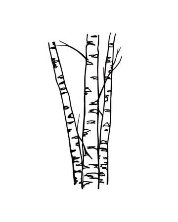 ●手描きの白樺の木の幹のベクトルイラスト。インク描画、グラフィックスタイル。美しい花のデザイン要素。 写真素材 - 93273121