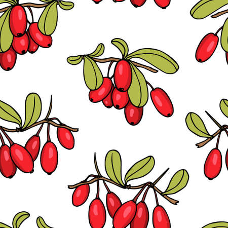 Vector seamless pattern with hand drawn barberry twigs. Beautiful floral design elements, ink drawing Illustration