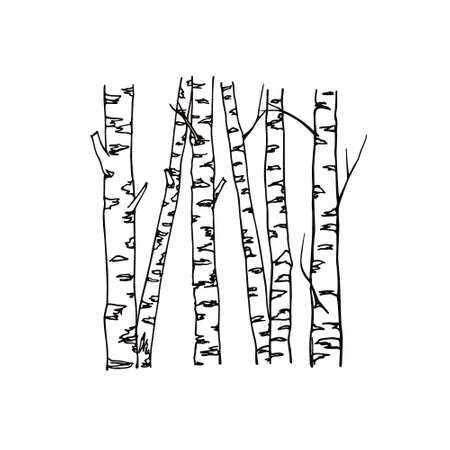 Vector illustration of hand drawn birch tree trunks. Ink drawing, graphic style. Beautiful floral design elements.