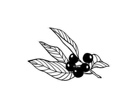 Vector illustration of hand drawn bird cherry twig. Beautiful floral design elements, ink drawing
