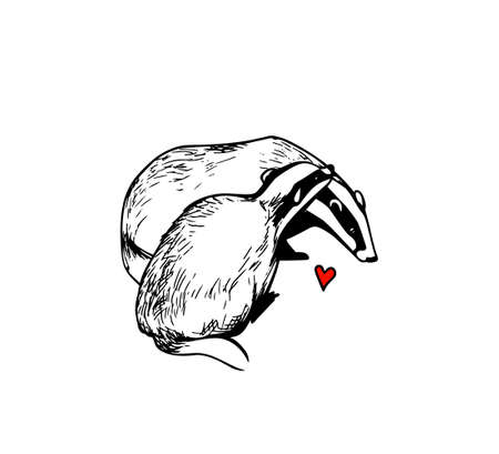 Vector illustration of hand drawn cute badgers in love. Beautiful design elements, ink drawing, funny romantic illustration. Perfect for Valentines day celebration.