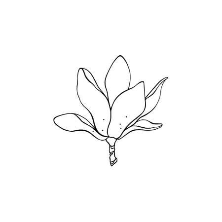 Hand drawn magnolia vector illustration