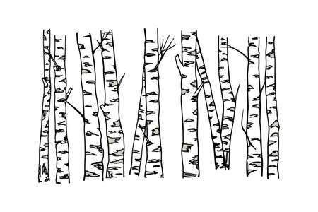 Hand drawn birch tree trunks