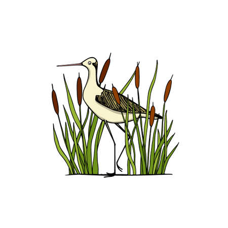 Vector illustration of hand drawn cute stilt standing among water plants. Beautiful animal design elements, ink drawing, logo template Illustration