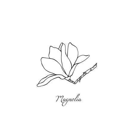 Hand drawn magnolia 向量圖像