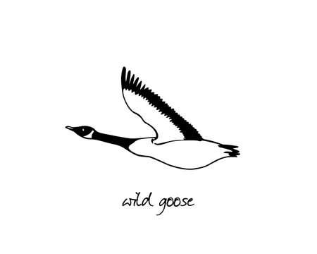 Hand drawn wild goose