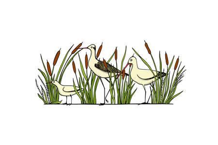 Hand drawn shorebirds