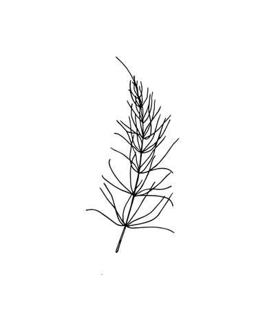 Hand drawn horsetail