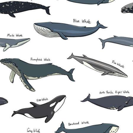 Hand drawn whale pattern  イラスト・ベクター素材