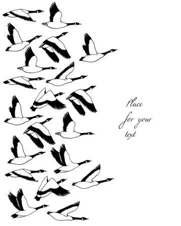 Hand drawn wild geese
