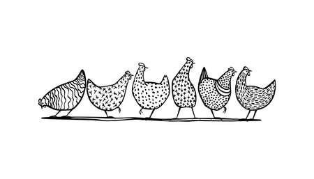 Hand drawn chickens
