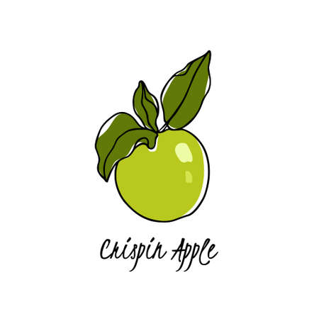 Vector card with hand drawn Crispin apple twig. Beautiful food design elements. Ink drawing