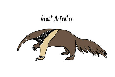 Hand drawn anteater