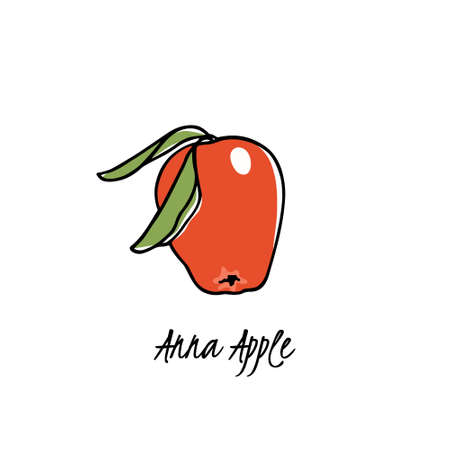 Vector card with hand drawn Anna apple. Beautiful food design elements. Ink drawing