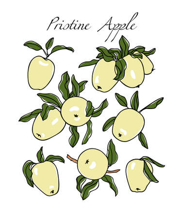 Vector card with hand drawn Pristine apples. Beautiful food design elements. Ink drawing