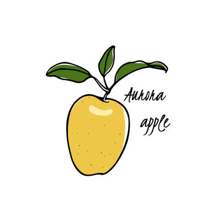 Vector card with hand drawn Aurora apple. Beautiful food design elements. Ink drawing Illustration