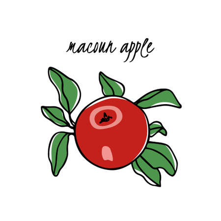 Vector card with hand drawn Macoun apple. Beautiful food design elements. Ink drawing