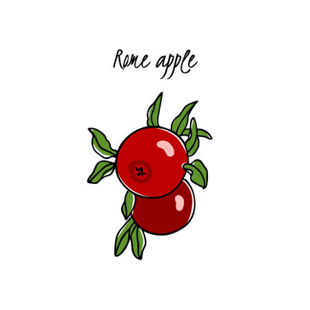 Vector card with hand drawn Rome apple. Beautiful food design elements. Ink drawing Illustration