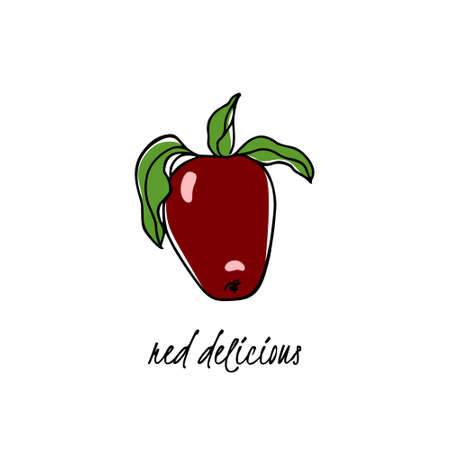 Vector card with hand drawn Red Delicious apple. Beautiful food design elements. Ink drawing Illustration